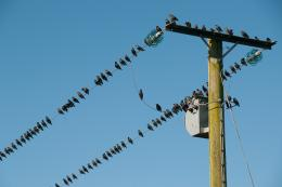 Starlings recharging